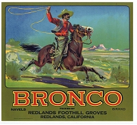 BRONCO BRAND VINTAGE REDLANDS ORANGE CRATE LABEL, Circa 1940's