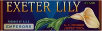 Exeter Lily Brand, Original Crate Label, Circa 1940's, 12.75x4.00
