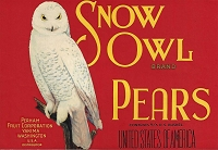 Snow Owl Brand, Original Pear Crate Label, Circa 1930's, 10.50 x 7.25