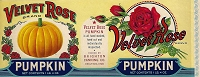 Velvet Rose Brand, Original Pumpkin Can Label, Circa 1930's, 11.00 x  4.75