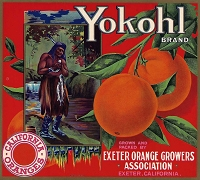 Yokohl Brand, Original Orange Crate Label, Circa 1920's, 11.00 x  10.00